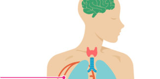 Circulatory System Diseases and Their Early signs and symptoms
