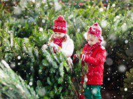How Buy Best Christmas Trees for Kids