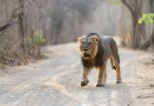 How do I Get from Sasan Gir National Park to Diu?