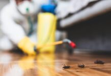 Pest Control in Vancouver