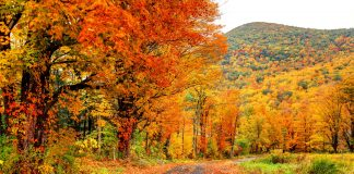 Best 5 New England In Fall Foliage