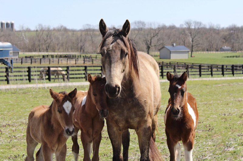 Horse Training Center
